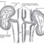 Inkstų akmenligės gydymas