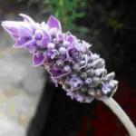 Aromaterapija – kvapų terapija