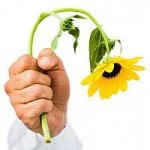 Gydo skintos gėlės