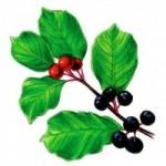 Produktai ir augalai, padedantys esant vidurių užkietėjimui