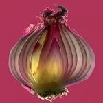 Svogūnas: puoselėjant grožį