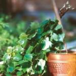 Pirties ir vantų nauda sveikatai bei grožiui